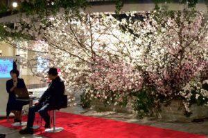 Liberte イベント装飾 桜