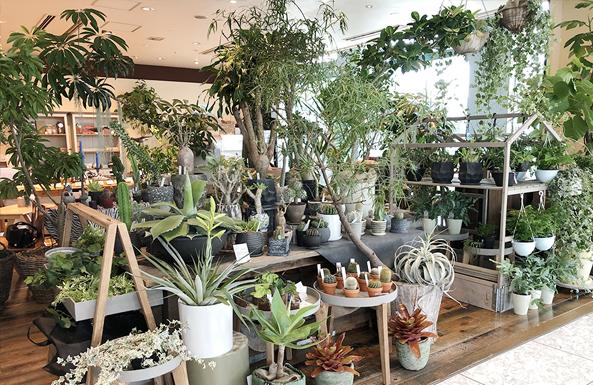 レミルフォイユドゥリベルテ東京 大崎店 観葉植物専門店